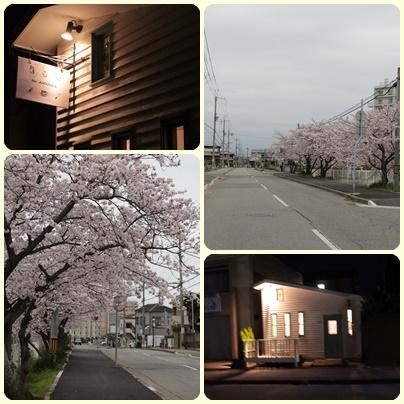 2016-4-4sakura